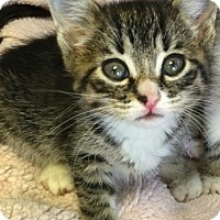 Adopt A Pet :: Aries - Island Park, NY