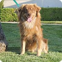 Adopt A Pet :: Buckles - Palo Alto, CA