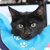 Adopt A Pet :: COAL - Las Vegas, NV