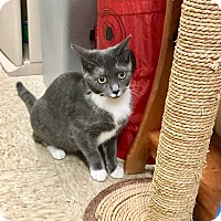 Adopt A Pet :: Selma - Colmar, PA