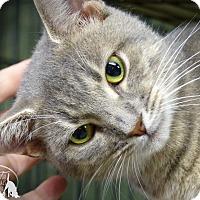 Adopt A Pet :: Peony - Marlinton, WV