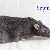 Adopt A Pet :: Seymour - Bradenton, FL