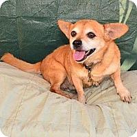 Adopt A Pet :: Butch - Bonsall, CA