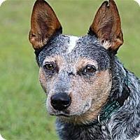 Adopt A Pet :: Rico - Orlando, FL