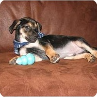 Adopt A Pet :: PRESLEY - TOMBALL, TX