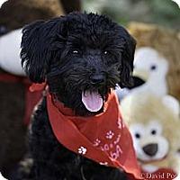 Adopt A Pet :: Sparkle - Calgary, AB