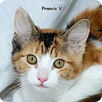 Adopt A Pet :: Francis V - Sacramento, CA