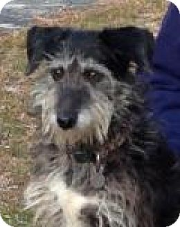 Terrier (Unknown Type, Medium) Mix Dog for adoption in Irmo, South Carolina - Trudi