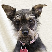 Adopt A Pet :: Devine - Ile-Perrot, QC