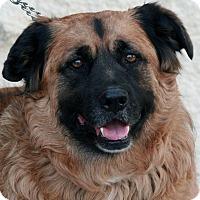 Adopt A Pet :: Chance - Palmdale, CA
