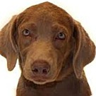 Adopt A Pet :: Prentiss