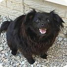 Adopt A Pet :: Kricket