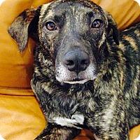 Adopt A Pet :: Fonzi - Miami, FL