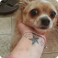 Adopt A Pet :: Mini - Phoenxville, PA