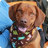 Adopt A Pet :: Lennox-PENDING - Garfield Heights, OH