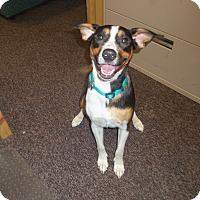 Adopt A Pet :: MILLIE - Medford, WI