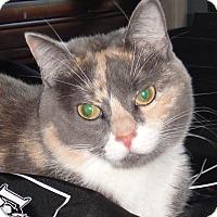 Adopt A Pet :: Diva - Miami, FL
