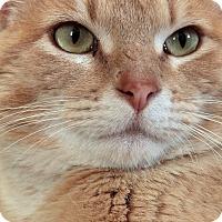 Adopt A Pet :: Earl Hines - St. Louis, MO