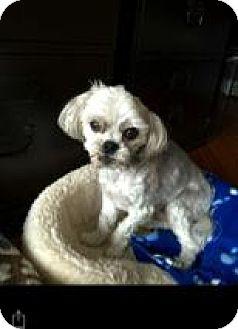 Maltese Mix Dog for adoption in Glenwood, Georgia - Frankie