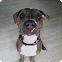 Adopt A Pet :: Solo* - Tampa, FL