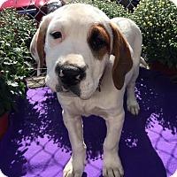 Adopt A Pet :: Target - Detroit, MI