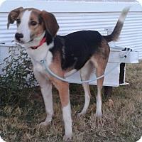 Adopt A Pet :: Tess - Manhattan, KS