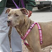 Adopt A Pet :: Stella - Windsor, VA