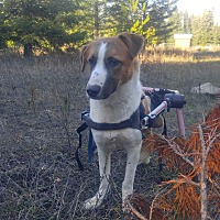 Adopt A Pet :: Hannah - Post Falls, ID