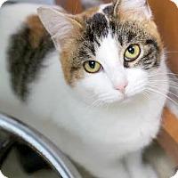 Adopt A Pet :: Dozie - Montclair, NJ