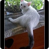 Adopt A Pet :: Dewey - Waldorf, MD