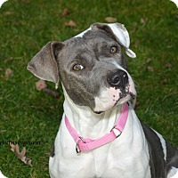 Adopt A Pet :: Jasmine Needs a foster home - Woodbury, NJ