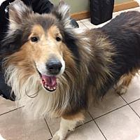 Adopt A Pet :: Skylar - Chantilly, VA