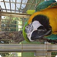 Adopt A Pet :: Odie - Punta Gorda, FL