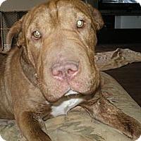 Adopt A Pet :: Blanche - Apex, NC