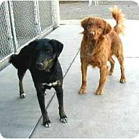 Adopt A Pet :: Rondo - Scottsdale, AZ