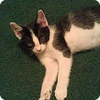 Adopt A Pet :: Elvis - Modesto, CA
