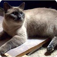 Adopt A Pet :: Athena - Brea, CA