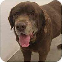 Adopt A Pet :: Nolan - Phoenix, AZ