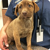 Adopt A Pet :: Smoochez - Cumming, GA