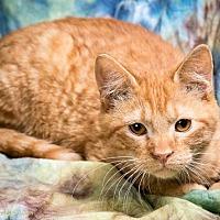 Adopt A Pet :: PATRICK - Anna, IL