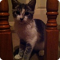 Adopt A Pet :: Lovely - Hamilton, ON