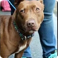Adopt A Pet :: HENNESSY - Charlotte, NC