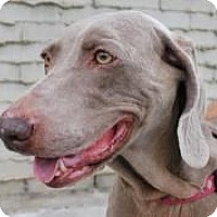 Adopt A Pet :: Breeze - Sun Valley, CA