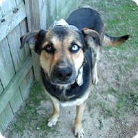 Adopt A Pet :: Reagan - Kimberton, PA