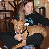 Adopt A Pet :: Brinley - Shrewsbury, NJ