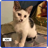 Adopt A Pet :: Kylo - Miami, FL