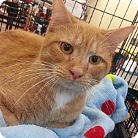 Adopt A Pet :: Roscoe - Maryville, TN