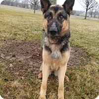 Adopt A Pet :: Cleo - Louisville, KY