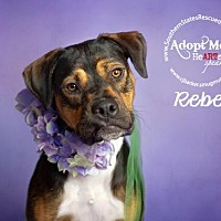 Adopt A Pet :: Rebel - White Hall, AR