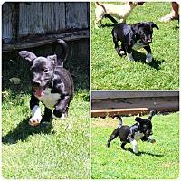 Adopt A Pet :: Miles - Yuba City, CA